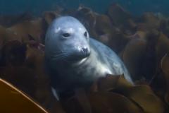 Farne Islands: Playful Seal