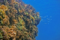 Diving Menorca July 2018